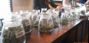 top 10 marijuana strains on shelf