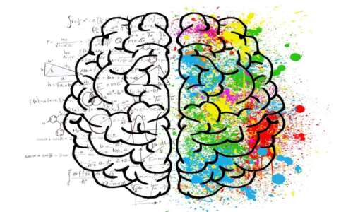brain drawing cbd and the brain